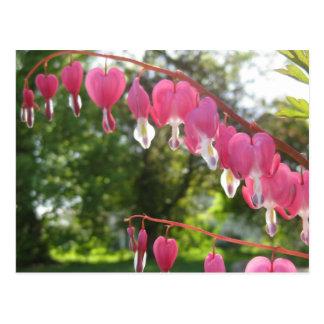 Flores do coração de sangramento cartão postal