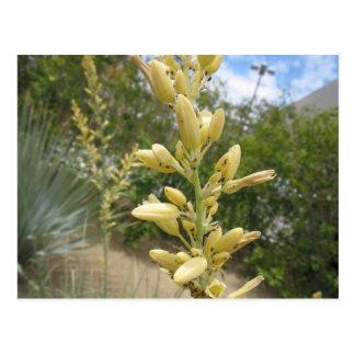 Flores do grupo da única costa Presentes amarelos