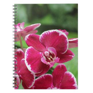 Flores e caderno tropicais das orquídeas