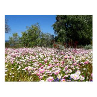 Flores eternas cartão postal