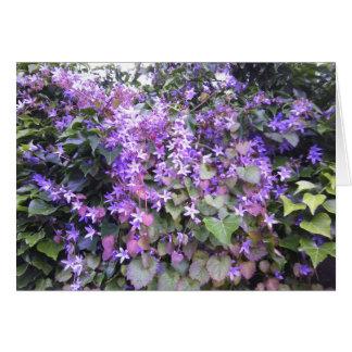Flores roxas/malva do cartão com fotos da natureza