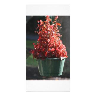 flores vermelhas da queda cartão com foto