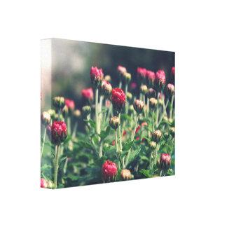Floresça a fotografia, cama de flor, ajardine impressão em tela
