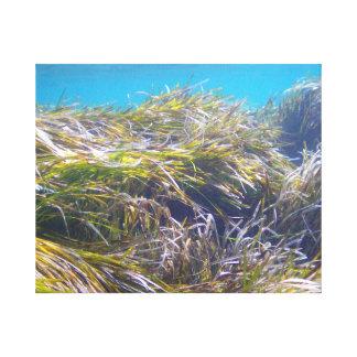 Floresta da grama de Netuno em Chipre subaquático Impressão Em Tela