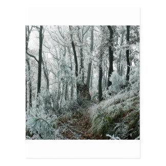 Floresta de Freezed da cena do inverno Cartão Postal