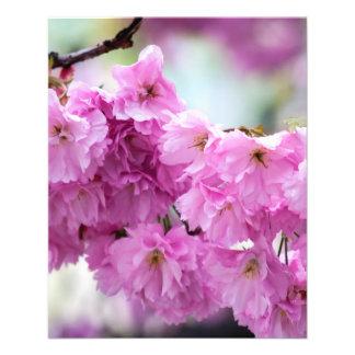 Flyer Cereja cor-de-rosa de Sakura