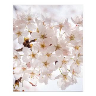 Flyer Flor de cerejeira de Japão