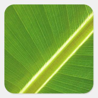 Folha de bananeira adesivo quadrado