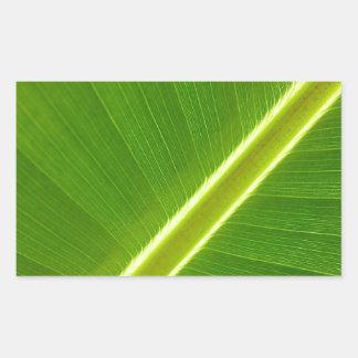 Folha de bananeira adesivos em formato retangulares