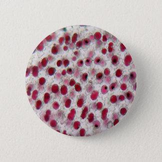 Folha de uma flor do cravo sob o microscópio bóton redondo 5.08cm