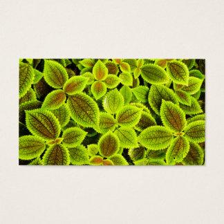 Folha verde-clara cartão de visitas