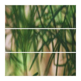 Folhas abstratas do verde