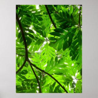 Folhas da árvore de frutas-pão pôsteres