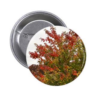 Folhas das árvores do outono da foto de cores da q pins