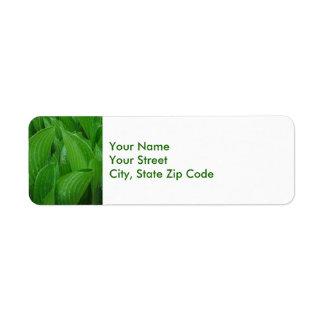 Folhas do Hosta com etiquetas de endereço do Etiqueta Endereço De Retorno