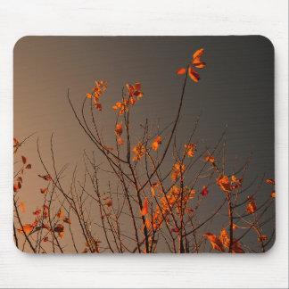 Folhas modernas elegantes da laranja em Bush