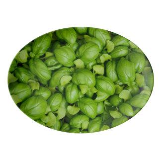 Folhas verdes da manjericão travessa de porcelana