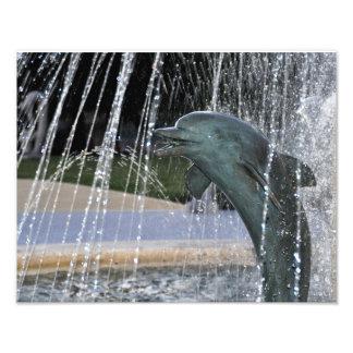 Fonte do golfinho impressão de foto