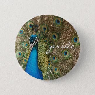 Foto a cores rico do pavão com mensagem do bóton redondo 5.08cm