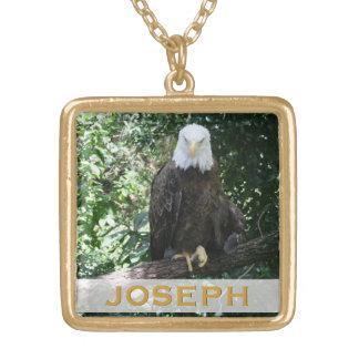 Foto americana dos animais selvagens da águia amer colares
