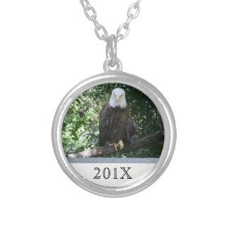 Foto americana dos animais selvagens da águia amer bijuteria