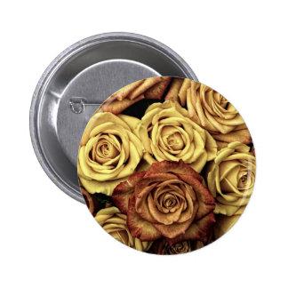 Foto antiga dos rosas boton