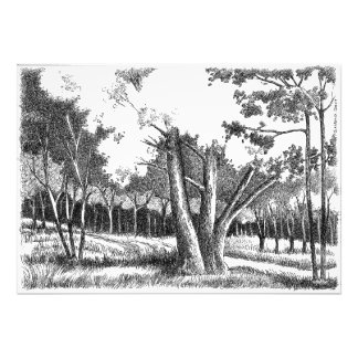 Foto Árvore de vida