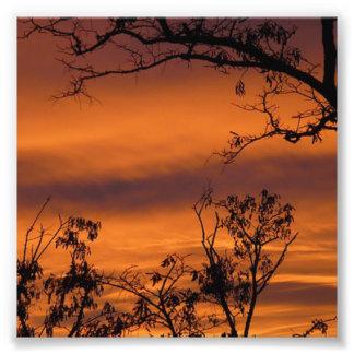 Foto Árvore do por do sol