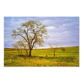 Foto Árvore em um campo