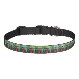 Foto azul e verde vermelha correntes de cachorro