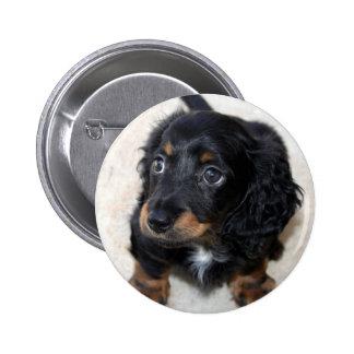 Foto bonita bonito do cão de filhote de cachorro d bóton redondo 5.08cm