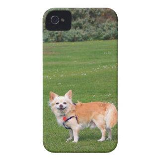 Foto bonita de cabelos compridos do cão da iPhone 4 capa