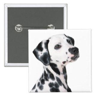 Foto bonita do cão Dalmatian, presente Bóton Quadrado 5.08cm