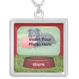 Foto bonito do animal de estimação do design da ba colar banhado a prata