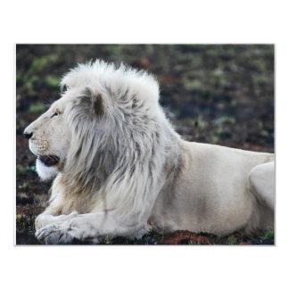 Foto branca africana do perfil do leão convite 10.79 x 13.97cm