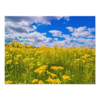 Foto Campo do impressão amarelo do céu azul 16x12 dos