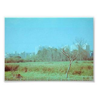 Foto Campo verde