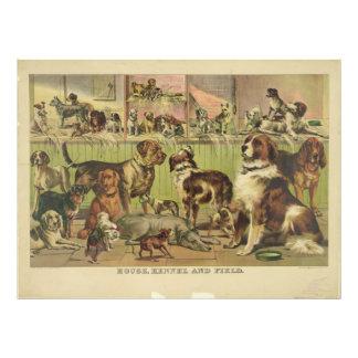 Foto Canil e campo da casa por Ives 1893