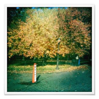 Foto: Central Park, queda