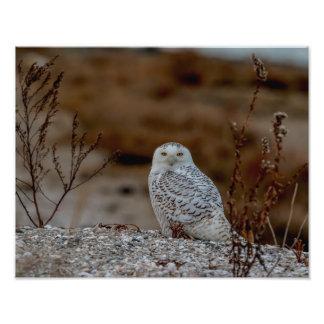 Foto coruja 14x11 nevado que senta-se em uma rocha