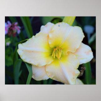 Foto da flor pôster