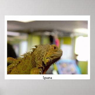 Foto da iguana pôster