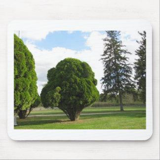 Foto da paisagem das árvores mouse pad