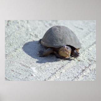 Foto da tartaruga pôster