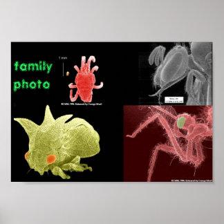 foto de família pôster