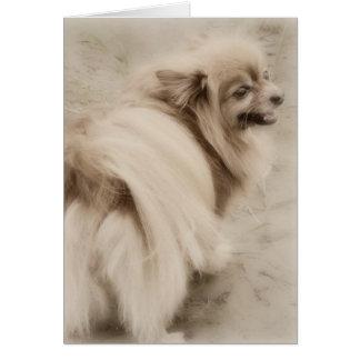 Foto de Pomeranian - Pom sonhador Cartão Comemorativo