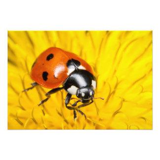 Foto de um joaninha vermelho na flor amarela do de