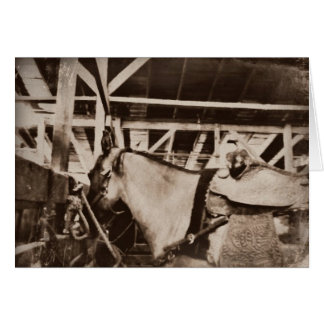 Foto de vista antiga do cavalo cartão