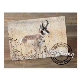 Foto do antílope de Pronghorn na madeira - Wyoming Cartão Postal