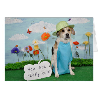 """Foto do cão na roupa, tema """"bonito"""" para qualquer cartão"""
